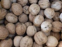 گردو ارگانیک طبیعی و خوشمزه در شیپور