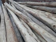 فروش چوب 4متر  در شیپور