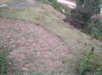 فروش زمین مسکونی ییلاقی 400 متر در چلاو در شیپور-عکس کوچک