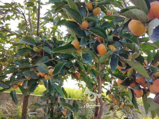 فروش باغ 5753 متری در کلوده در گروه خرید و فروش املاک در مازندران در شیپور-عکس1