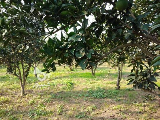 فروش باغ 5753 متری در کلوده در گروه خرید و فروش املاک در مازندران در شیپور-عکس4