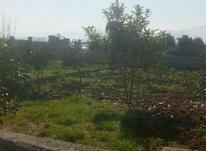 فروش زمین 1000 متر در آمل در شیپور-عکس کوچک