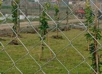 زمین باغی 320 متر  در شیپور-عکس کوچک