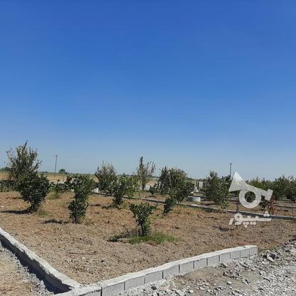 زمین باغچه  200 متر  در گروه خرید و فروش املاک در مازندران در شیپور-عکس3