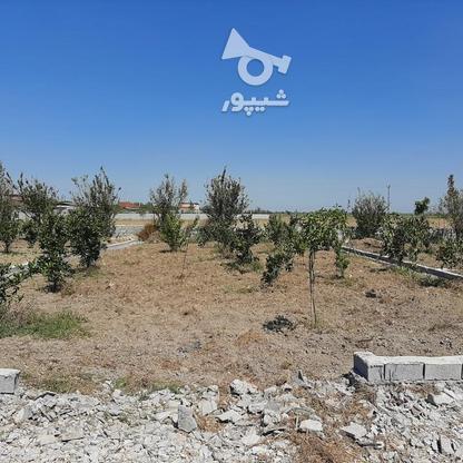 زمین باغچه  200 متر  در گروه خرید و فروش املاک در مازندران در شیپور-عکس6