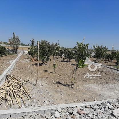زمین باغچه  200 متر  در گروه خرید و فروش املاک در مازندران در شیپور-عکس5