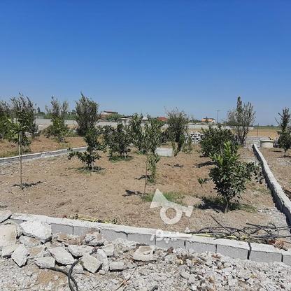 زمین باغچه  200 متر  در گروه خرید و فروش املاک در مازندران در شیپور-عکس4