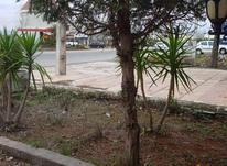فروش زمین ساحلی سنددار در شیپور-عکس کوچک