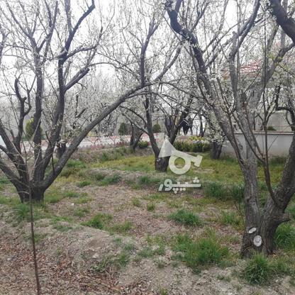 فروش ویلا 1000 متر در شهریار در گروه خرید و فروش املاک در تهران در شیپور-عکس6