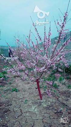 فروش باغچه دارای مجوز ساخت در گروه خرید و فروش املاک در تهران در شیپور-عکس3
