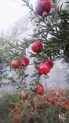 فروش باغچه دارای مجوز ساخت در گروه خرید و فروش املاک در تهران در شیپور-عکس6