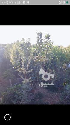 فروش باغچه دارای مجوز ساخت در گروه خرید و فروش املاک در تهران در شیپور-عکس2