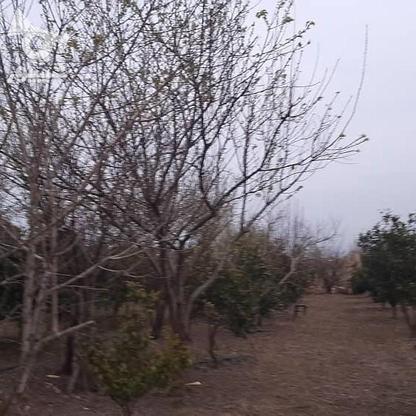 فروش باغ مرکبات(پرتقالی) در گروه خرید و فروش املاک در مازندران در شیپور-عکس5