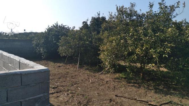 فروش 250 متر باغ مسکونی منطقه گلدشت در گروه خرید و فروش املاک در مازندران در شیپور-عکس1
