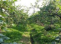 زمین کشاورزی 1500 متری در شیپور-عکس کوچک