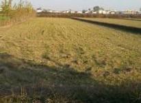 فروش زمین کشاورزی 1000 متر در آمل در شیپور-عکس کوچک