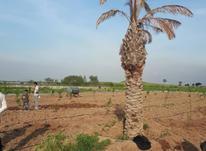 زمیندارایدرخت در شیپور-عکس کوچک