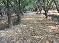 باغ ویلا 500متری با بنا در شهریار در شیپور-عکس کوچک