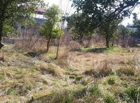 فروش زمین شهرکی 700 متر در متل قو در شیپور-عکس کوچک