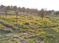 زمین 200 متر معرکه و اکازیون -به قیمت خرید در شیپور-عکس کوچک