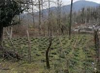 270 متر زمین دو بر تمام مسکونی تو دل جنگل در شیپور-عکس کوچک