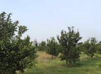 زمین 2300 متری جاده نظامی روستا ایوک در شیپور-عکس کوچک