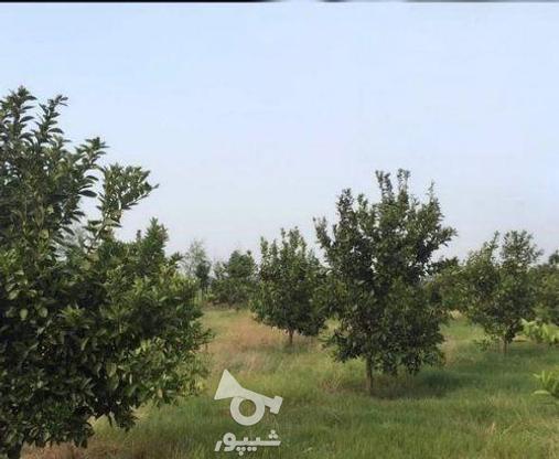 زمین 2300 متری جاده نظامی ایوک(با مجوزساخت) در گروه خرید و فروش املاک در مازندران در شیپور-عکس13