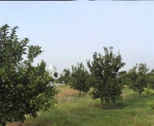 زمین 2300 متری جاده نظامی ایوک(با مجوزساخت) در گروه خرید و فروش املاک در مازندران در شیپور-عکس9