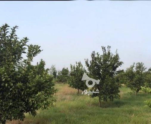 زمین 2300 متری جاده نظامی ایوک(با مجوزساخت) در گروه خرید و فروش املاک در مازندران در شیپور-عکس8