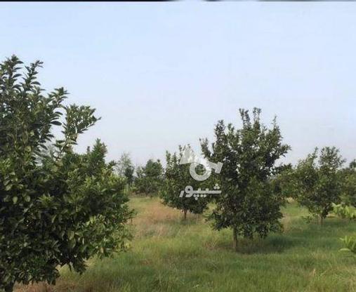 زمین 2300 متری جاده نظامی ایوک(با مجوزساخت) در گروه خرید و فروش املاک در مازندران در شیپور-عکس3