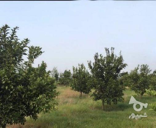 زمین 2300 متری جاده نظامی ایوک(با مجوزساخت) در گروه خرید و فروش املاک در مازندران در شیپور-عکس11