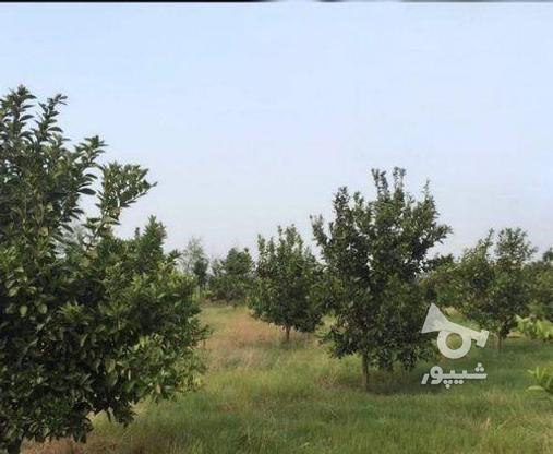 زمین 2300 متری جاده نظامی ایوک(با مجوزساخت) در گروه خرید و فروش املاک در مازندران در شیپور-عکس2