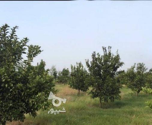زمین 2300 متری جاده نظامی ایوک(با مجوزساخت) در گروه خرید و فروش املاک در مازندران در شیپور-عکس1