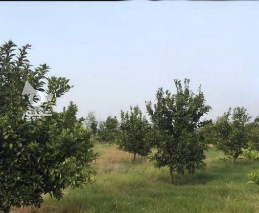 زمین 2300 متری جاده نظامی ایوک(با مجوزساخت) در گروه خرید و فروش املاک در مازندران در شیپور-عکس15
