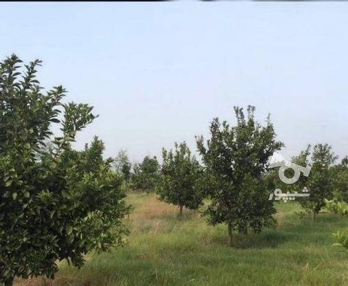 زمین 2300 متری جاده نظامی ایوک(با مجوزساخت) در گروه خرید و فروش املاک در مازندران در شیپور-عکس7