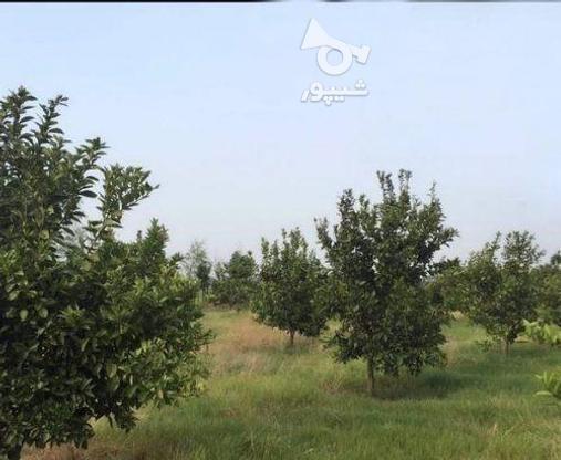 زمین 2300 متری جاده نظامی ایوک(با مجوزساخت) در گروه خرید و فروش املاک در مازندران در شیپور-عکس14