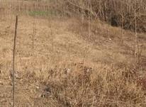 فروش زمین مسکونی 300 متر در خشکبیجار در شیپور-عکس کوچک