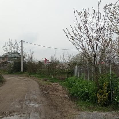فروش زمین مسکونی 420 متر در لنگرود در گروه خرید و فروش املاک در گیلان در شیپور-عکس4