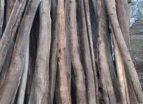 چوب سالم 3متری دوکاریته 12متری در شیپور-عکس کوچک