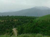 زمین مسکونی 485 متری در کلاردشت در شیپور-عکس کوچک