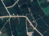 فروش زمین کشاورزی 6000 متر در مهاباد در شیپور-عکس کوچک