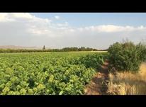 زمین کشاورزی سند دار 2 هکتار در شیپور-عکس کوچک