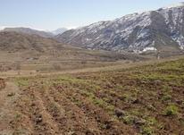 7000 هزار متر زمین  باغی در دیلمان سیاهکل در شیپور-عکس کوچک