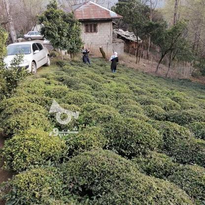 3712 متر زمین مسکونی در ارتفاعات املش در گروه خرید و فروش املاک در گیلان در شیپور-عکس7