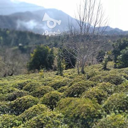 3712 متر زمین مسکونی در ارتفاعات املش در گروه خرید و فروش املاک در گیلان در شیپور-عکس3