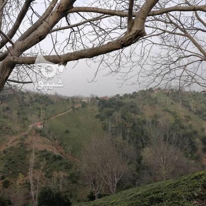 3712 متر زمین مسکونی در ارتفاعات املش در گروه خرید و فروش املاک در گیلان در شیپور-عکس1