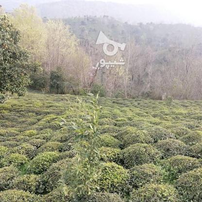 3712 متر زمین مسکونی در ارتفاعات املش در گروه خرید و فروش املاک در گیلان در شیپور-عکس5