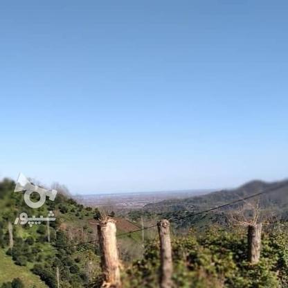 3712 متر زمین مسکونی در ارتفاعات املش در گروه خرید و فروش املاک در گیلان در شیپور-عکس9