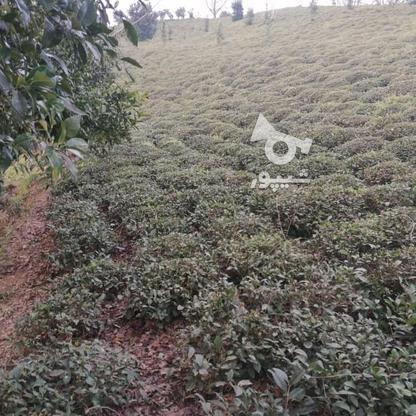 3712 متر زمین مسکونی در ارتفاعات املش در گروه خرید و فروش املاک در گیلان در شیپور-عکس4