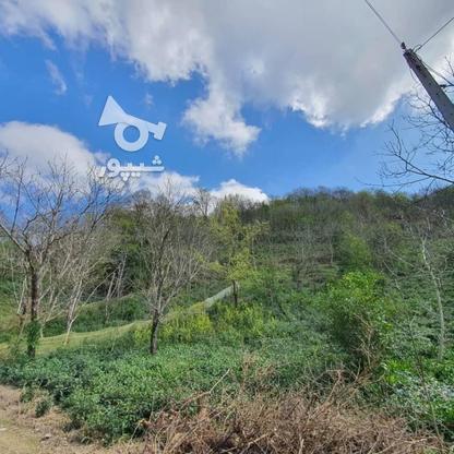 140 متر زمین مسکونی در کوهبنه در گروه خرید و فروش املاک در گیلان در شیپور-عکس2